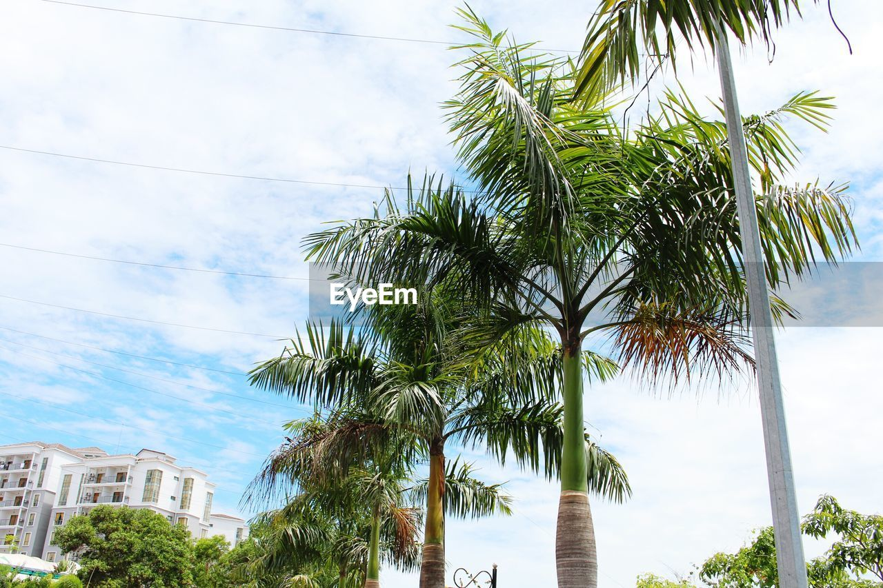 tree, palm tree, sky, day, low angle view, no people, growth, nature, scenics, cloud - sky, built structure, architecture, building exterior, outdoors, branch, beauty in nature