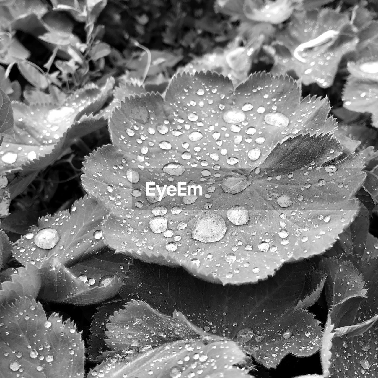 water, drop, beauty in nature, growth, plant, wet, close-up, freshness, nature, fragility, no people, vulnerability, flower, plant part, leaf, day, flower head, outdoors, rain, purity, dew, raindrop, leaves