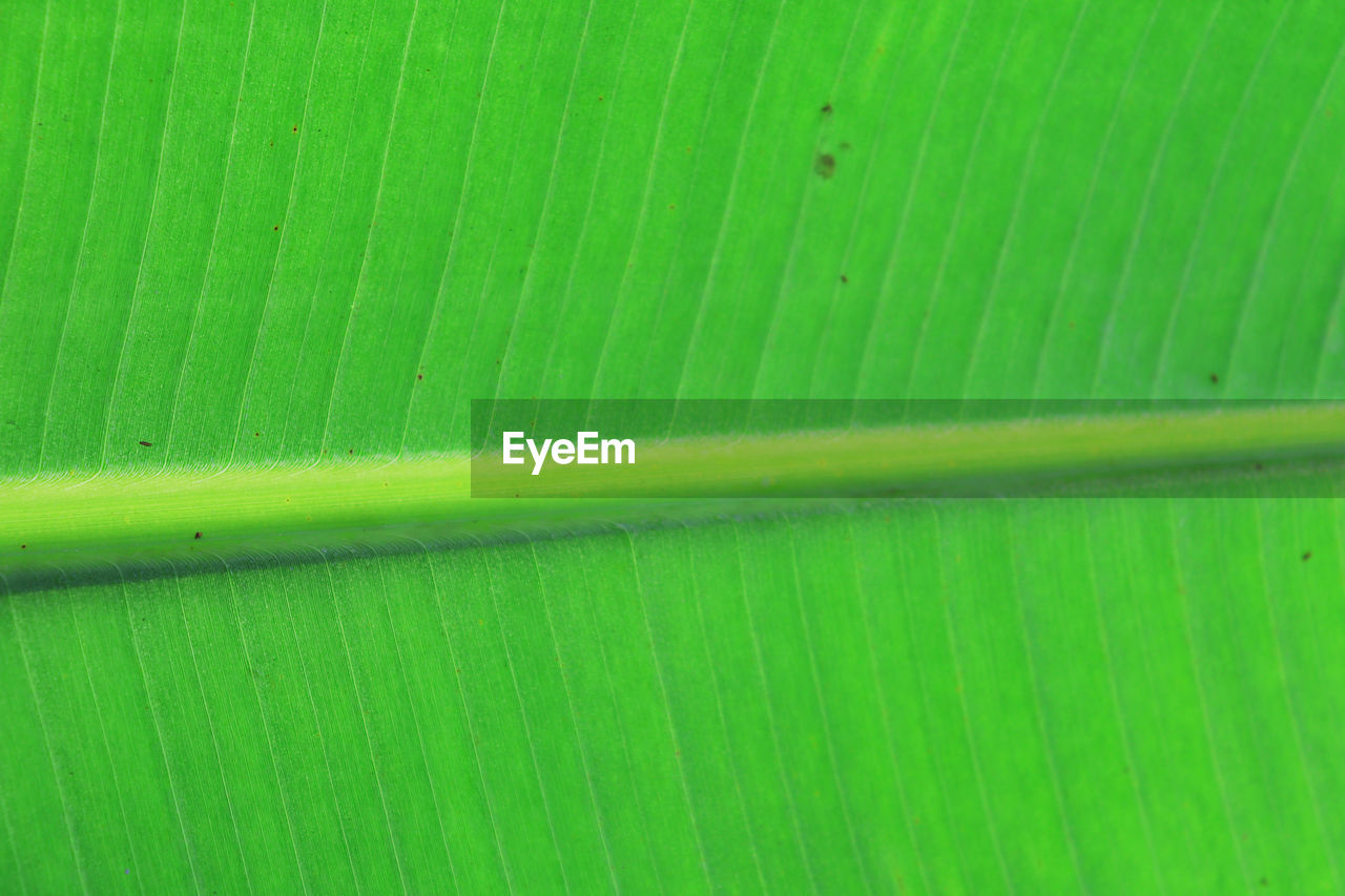 green color, leaf, plant part, close-up, full frame, backgrounds, pattern, no people, natural pattern, banana leaf, nature, growth, beauty in nature, day, plant, textured, freshness, leaves, leaf vein, outdoors, palm leaf