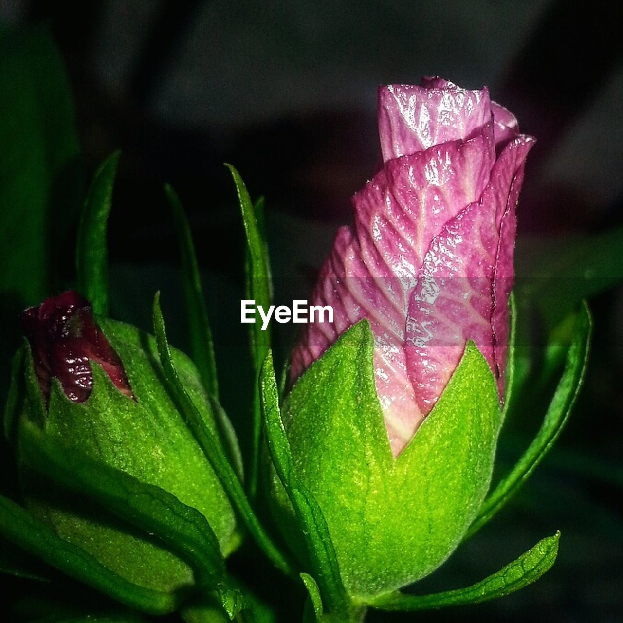 nature, leaf, beauty in nature, fragility, flower, green color, freshness, growth, plant, drop, close-up, no people, pink color, day, outdoors, flower head, water