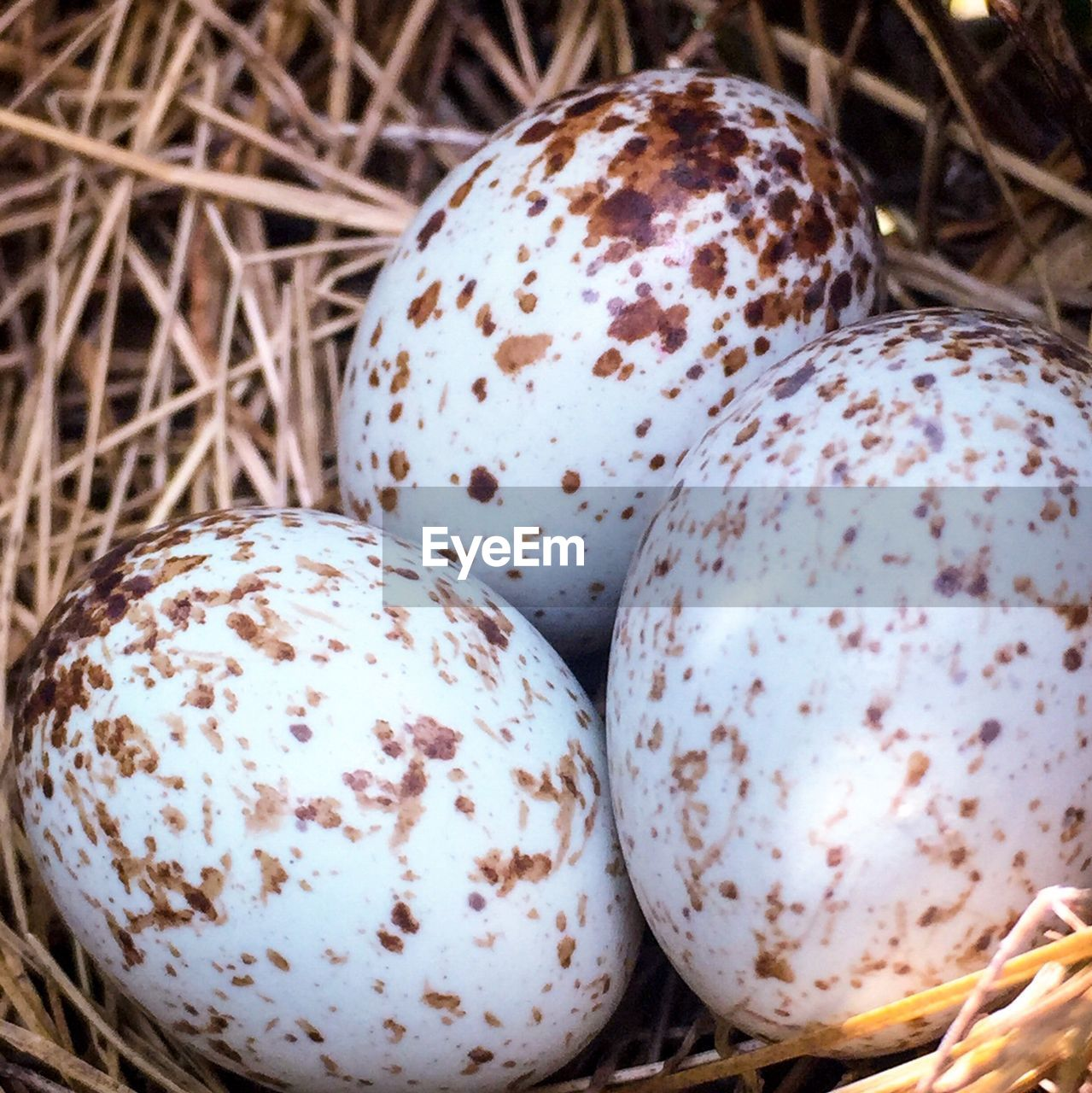 egg, food and drink, easter, easter egg, food, close-up, no people, day, celebration, nature, fragility, outdoors, healthy eating, freshness