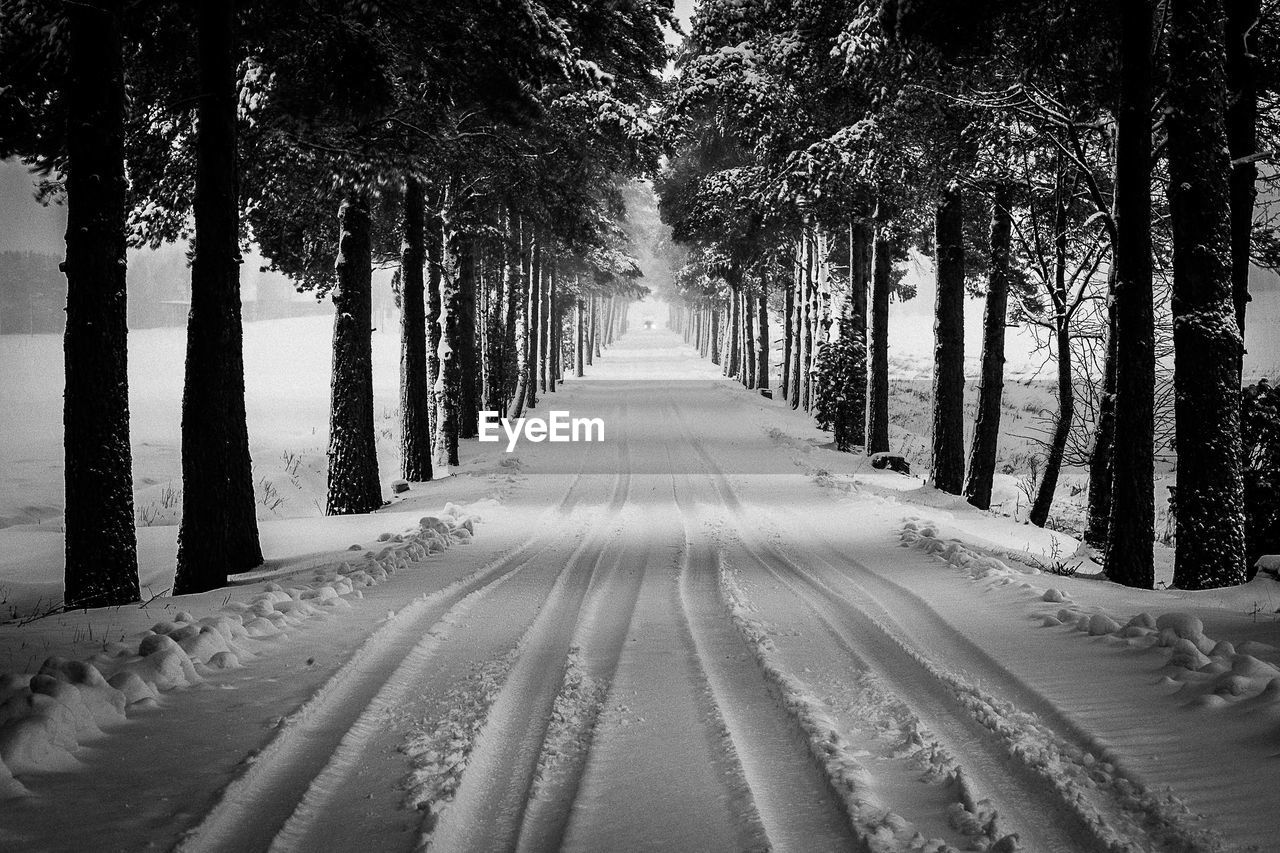 Road Through Trees During Winter