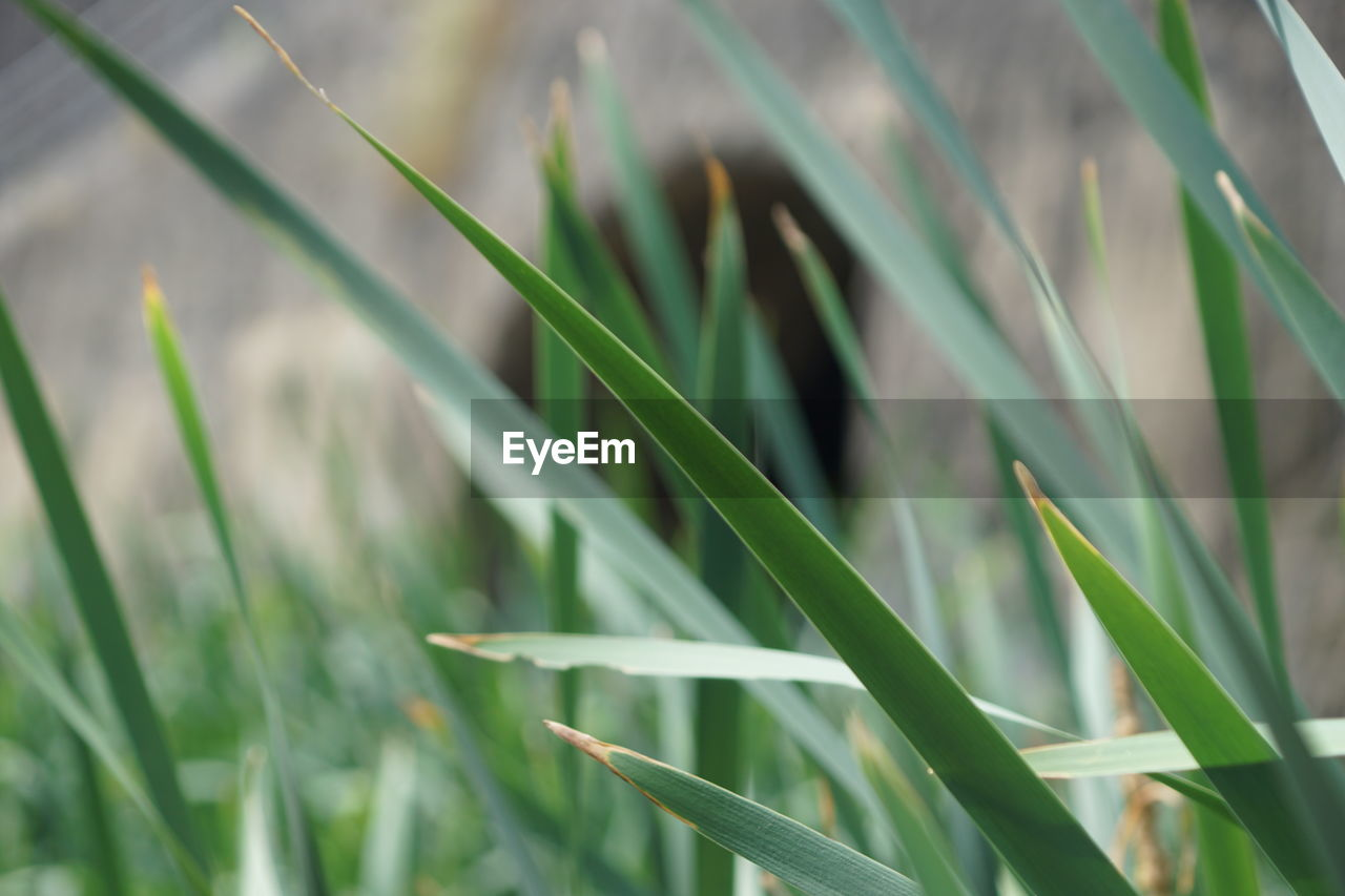 grass, growth, green color, plant, nature, field, day, outdoors, no people, close-up, beauty in nature, freshness