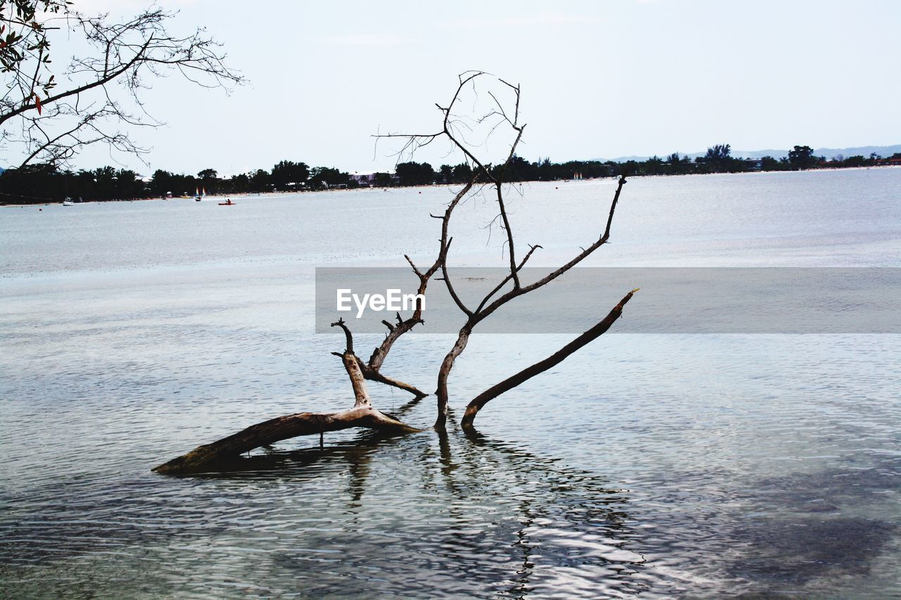 nature, bare tree, water, tree, branch, tranquility, sky, outdoors, lake, beauty in nature, lone, day, no people, clear sky, dead tree