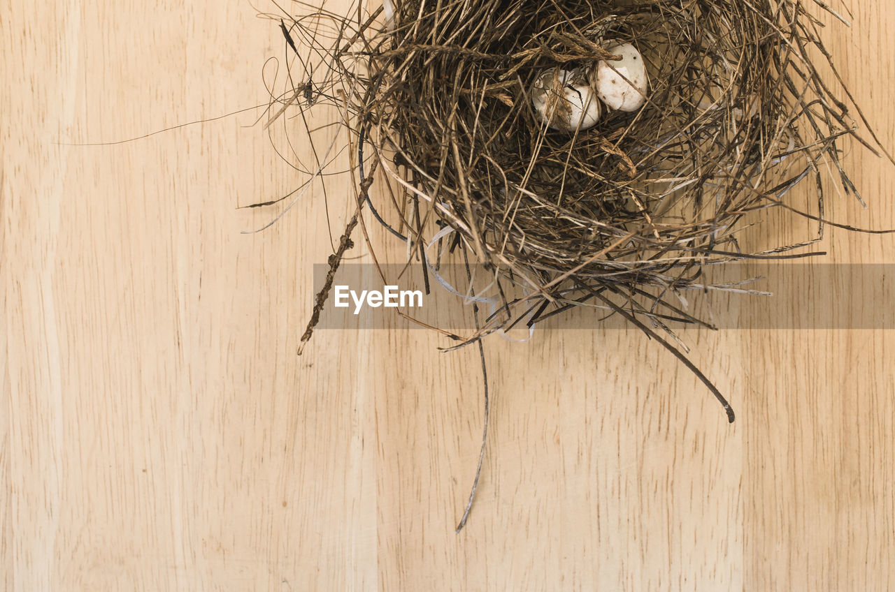 animal nest, copy space, high angle view, hay, bird nest, no people, close-up, fragility, backgrounds, nature, day, indoors