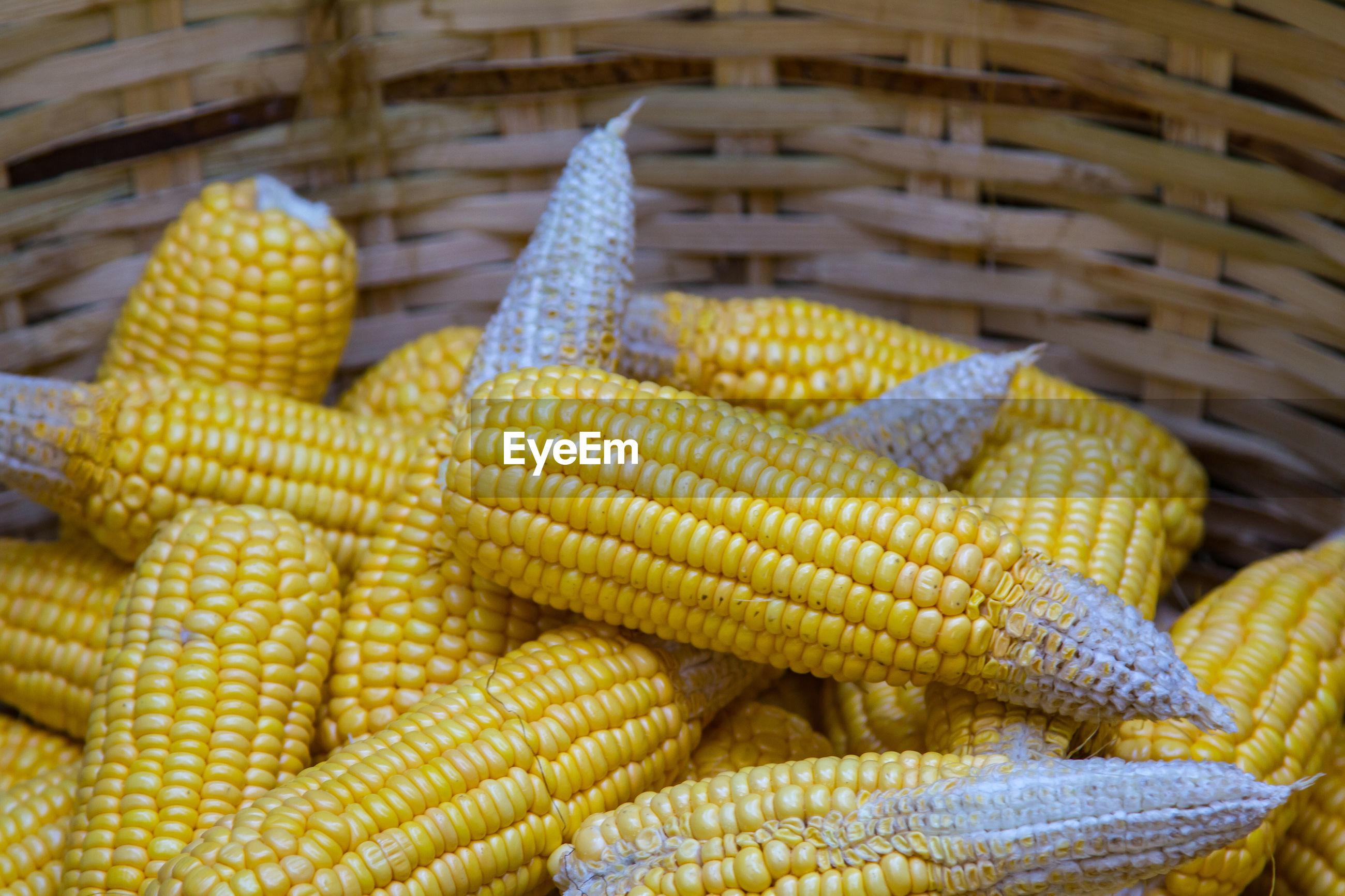 Ripe dried corn cobs,corn seeds make it dry