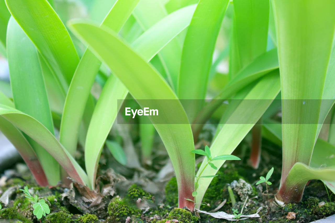 growth, green color, plant part, plant, leaf, nature, close-up, day, field, land, no people, beauty in nature, selective focus, outdoors, freshness, vegetable, grass, focus on foreground, sunlight, agriculture, blade of grass