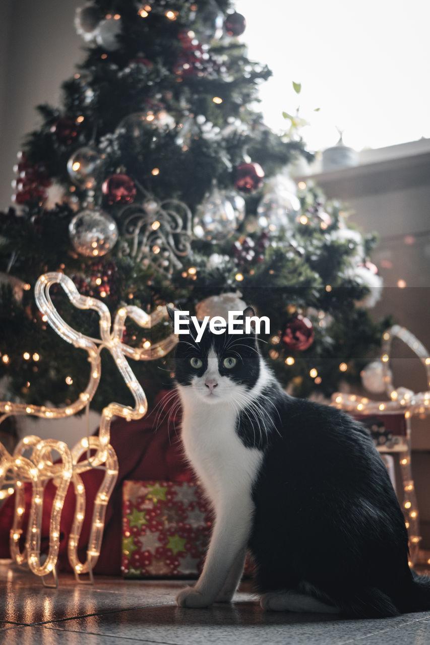 CAT ON CHRISTMAS TREE