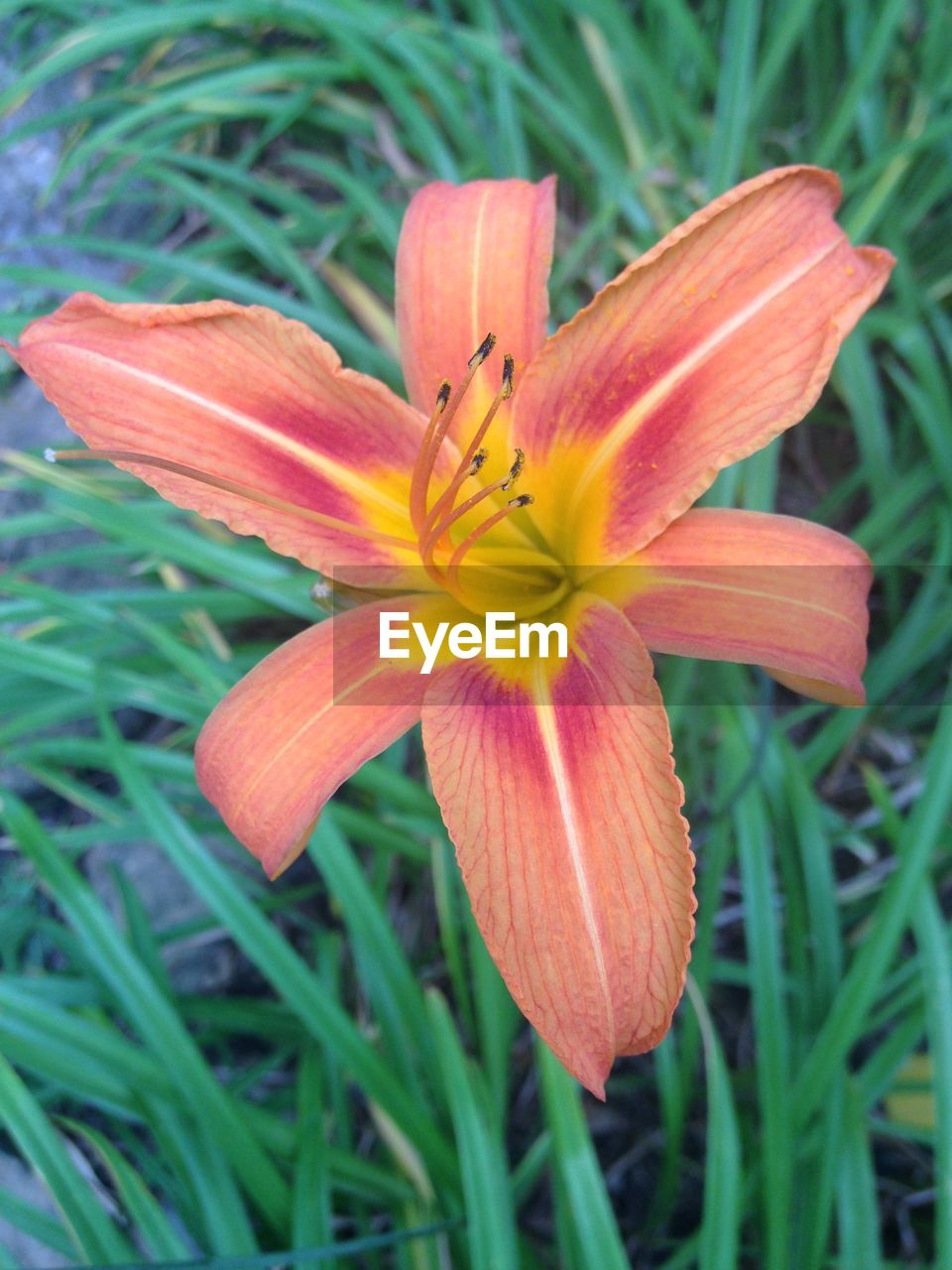 flower, petal, growth, flower head, fragility, beauty in nature, nature, freshness, close-up, blooming, no people, day, day lily, outdoors, plant
