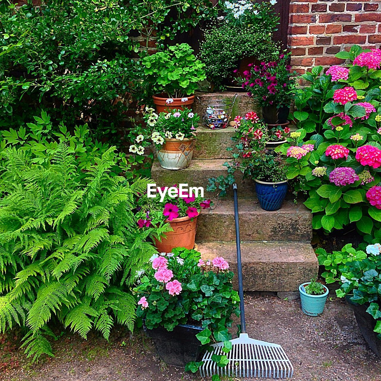 Potted Plants On Steps