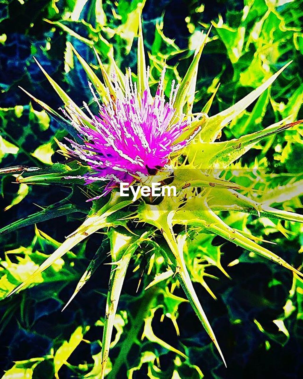 flower, purple, growth, nature, beauty in nature, no people, fragility, flower head, day, plant, freshness, outdoors, thistle, close-up, passion flower