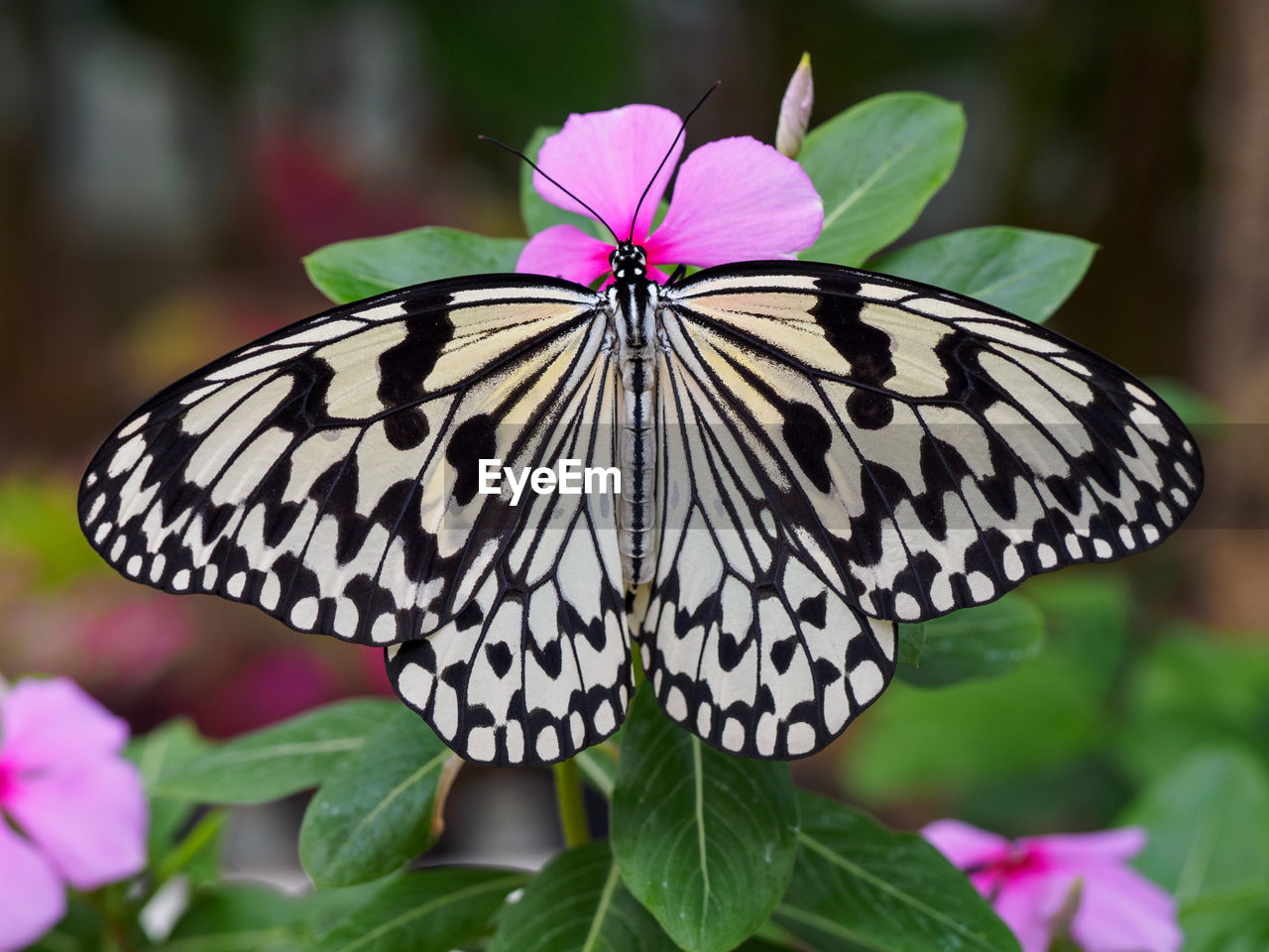 Close-Up Of Butterfly On Flower Outdoors