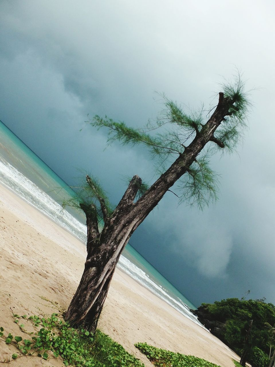 tree, nature, scenics, tranquil scene, tranquility, beauty in nature, water, no people, sky, sea, day, horizon over water, tree trunk, outdoors, landscape, branch, dead tree