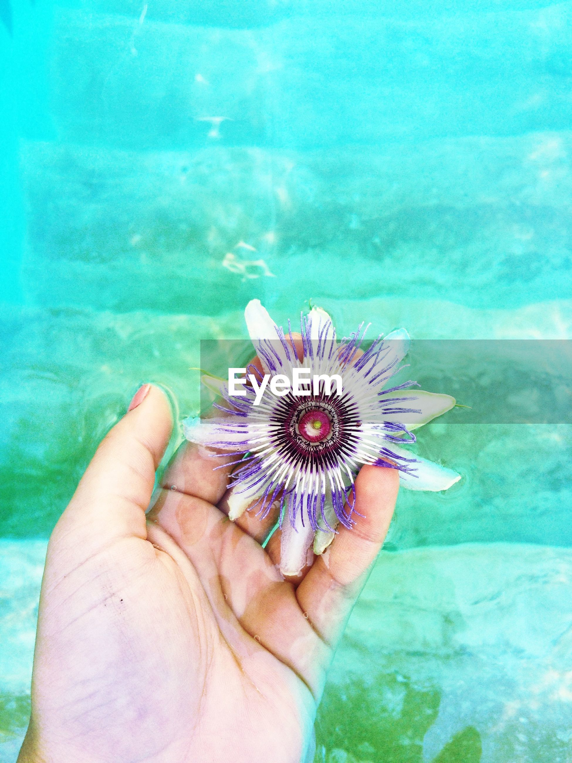 person, holding, part of, unrecognizable person, human finger, personal perspective, leisure activity, cropped, blue, lifestyles, animal themes, close-up, one animal, water, wildlife, animals in the wild, sea