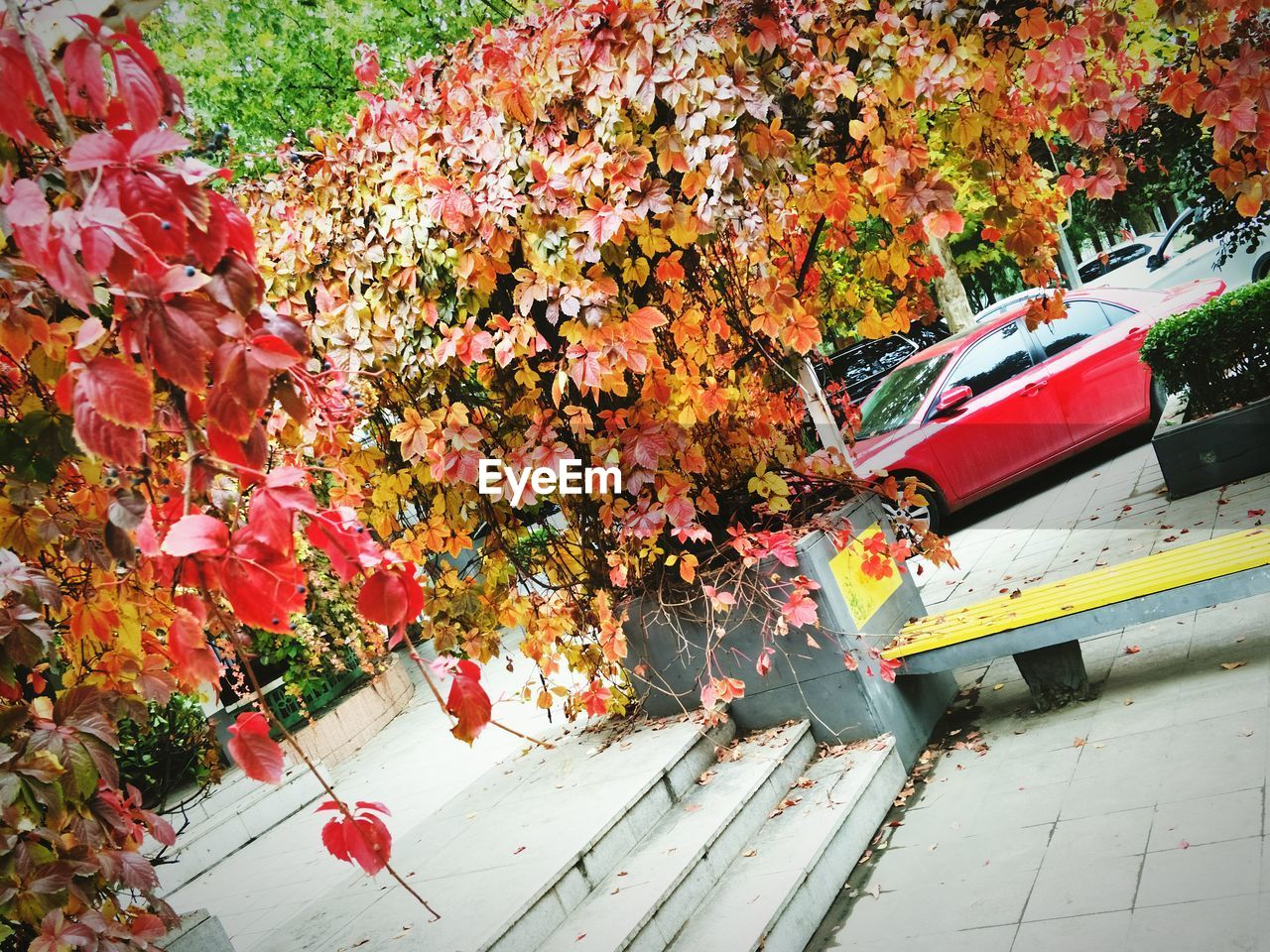 autumn, leaf, change, nature, outdoors, day, beauty in nature, land vehicle, no people, red, growth, maple leaf, mode of transport, tree, plant, transportation, fragility, yellow, flower, close-up, maple
