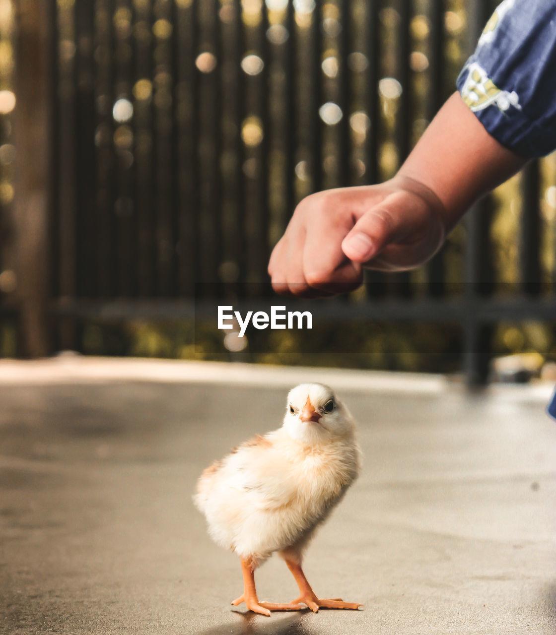 Full length of hand holding bird against blurred background