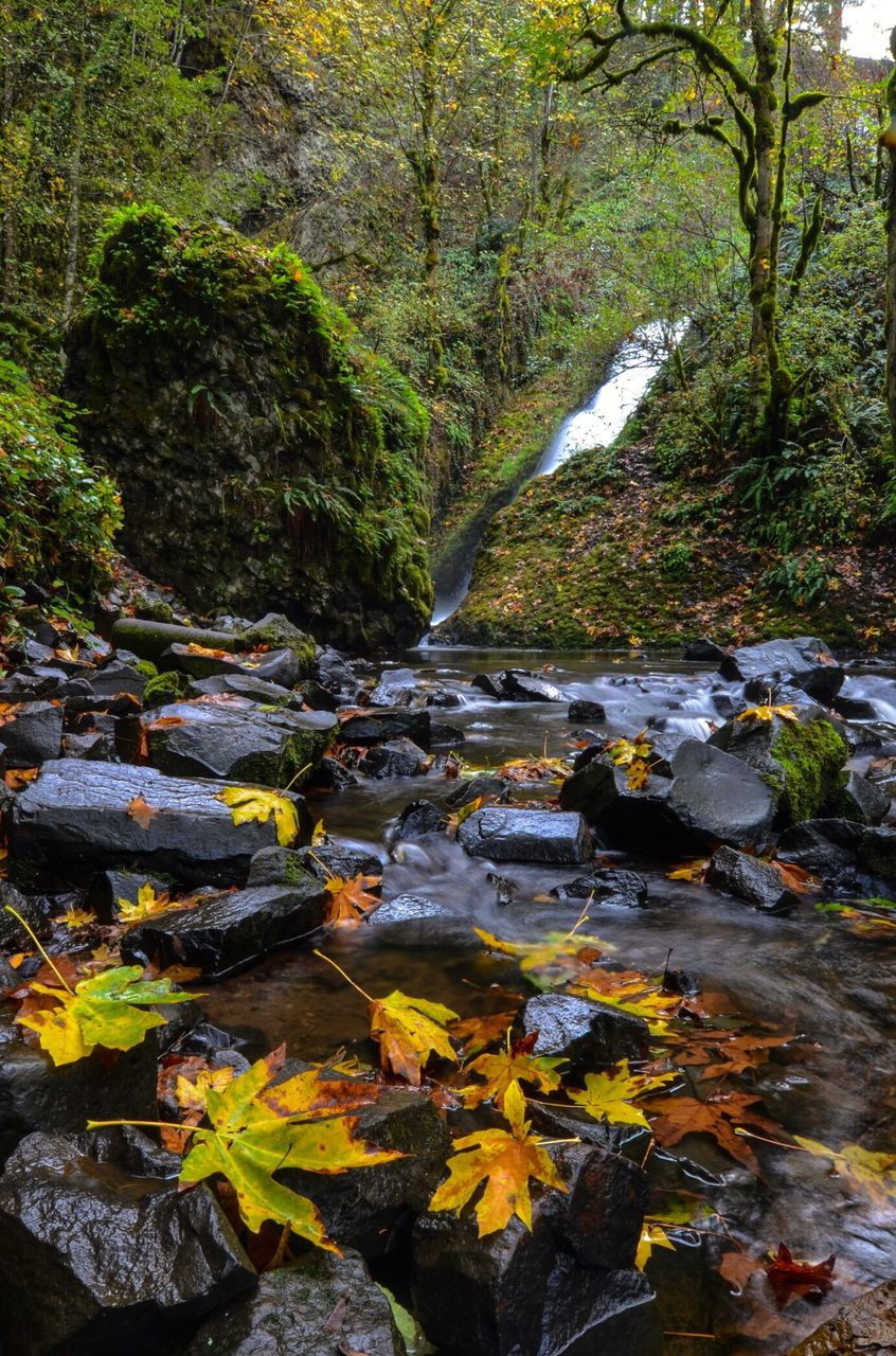 nature, water, flowing water, beauty in nature, tranquil scene, waterfall, tranquility, stream, leaf, forest, autumn, outdoors, no people, tree, rock - object, day, scenics, stream - flowing water, plant, growth, freshness