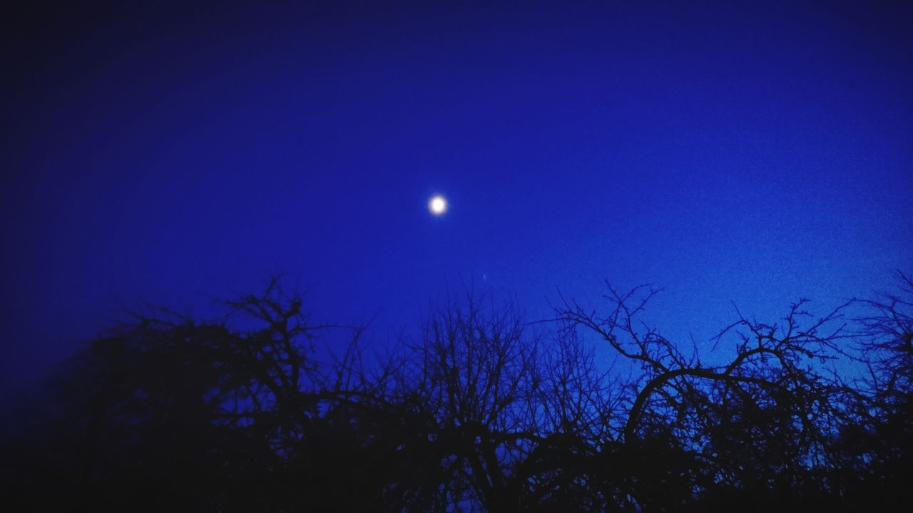 moon, night, beauty in nature, astronomy, nature, half moon, blue, scenics, moonlight, tranquil scene, tranquility, outdoors, tree, crescent, low angle view, sky, clear sky, no people, solar eclipse, space