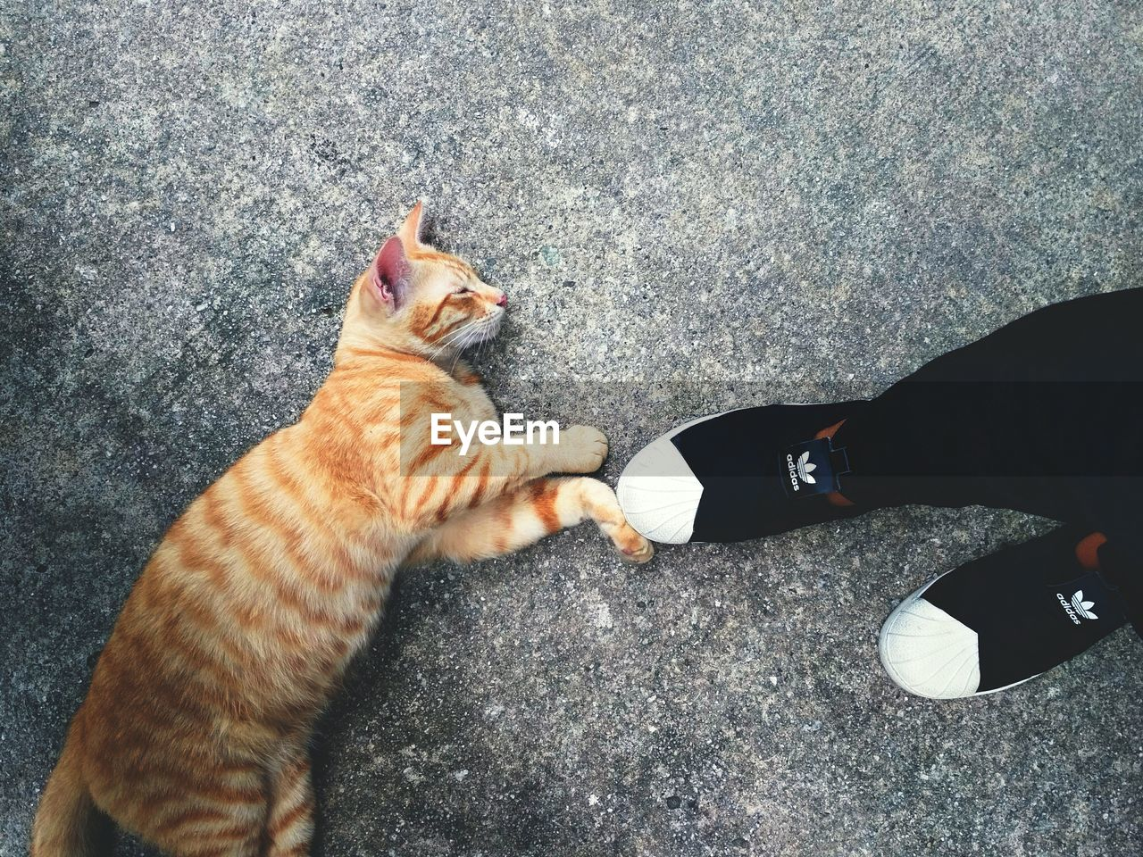 pets, domestic animals, domestic cat, high angle view, one animal, human body part, one person, real people, mammal, human leg, human hand, feline, low section, lifestyles, men, standing, day, outdoors, women, ginger cat, friendship, people