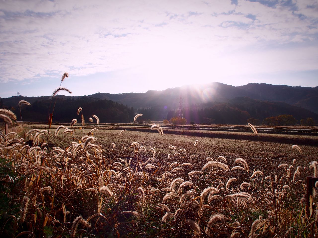 landscape, sky, environment, land, field, plant, nature, agriculture, tranquility, scenics - nature, mountain, tranquil scene, beauty in nature, growth, rural scene, crop, no people, cloud - sky, sunlight, day, lens flare, outdoors, bright, plantation