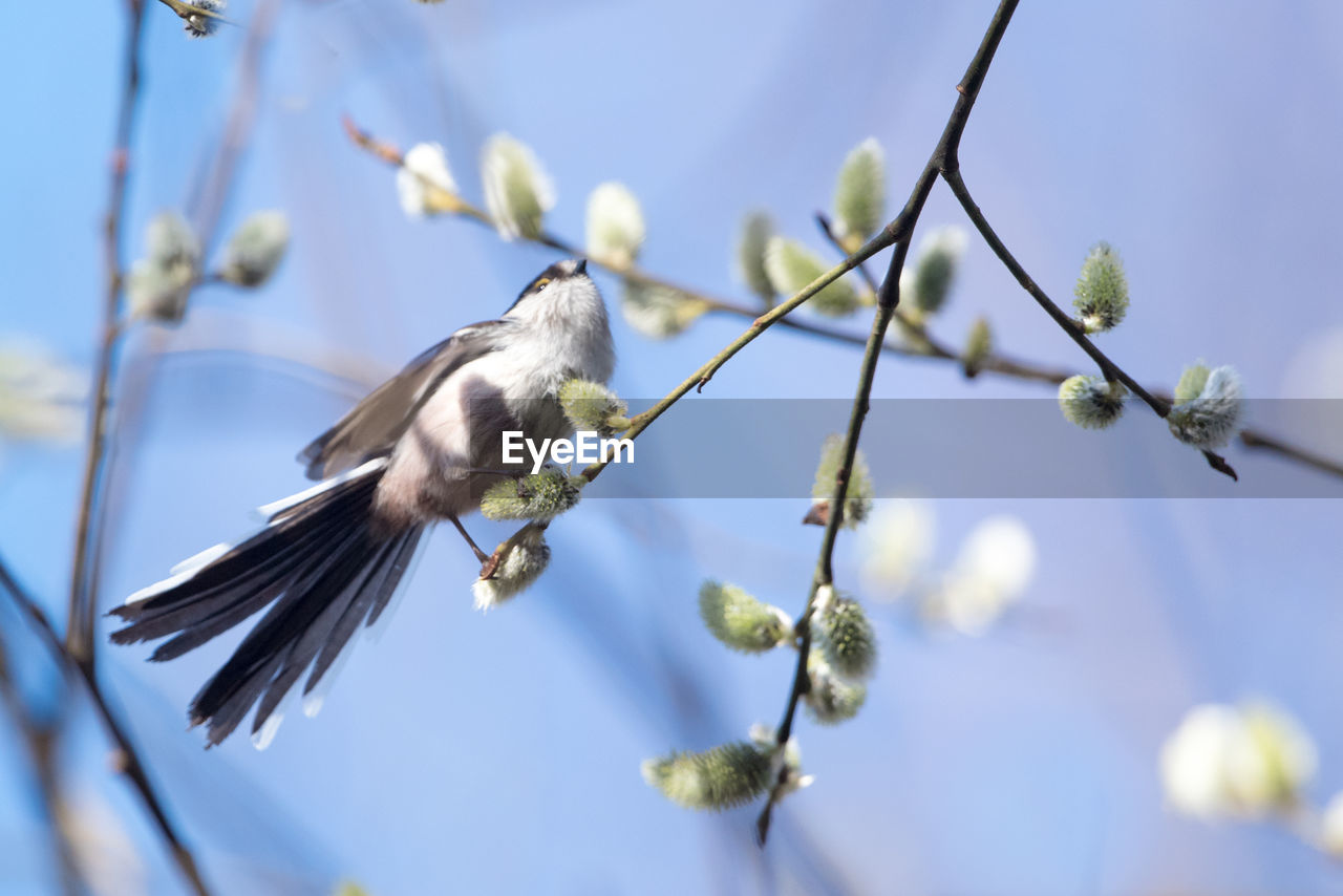 bird, animal, animal themes, vertebrate, animal wildlife, plant, animals in the wild, one animal, perching, tree, beauty in nature, no people, low angle view, selective focus, day, branch, nature, flower, close-up, flowering plant