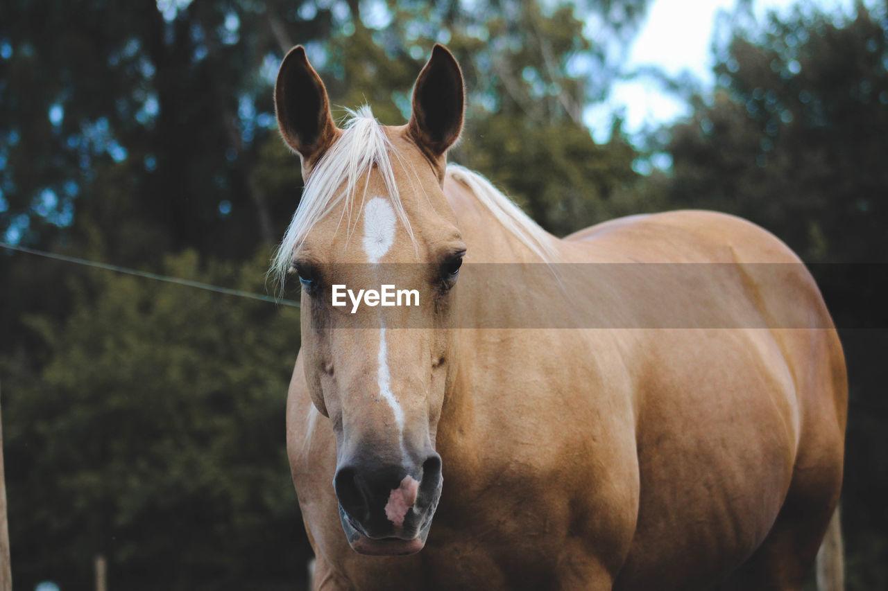 Portrait Of Horse Standing In Farm