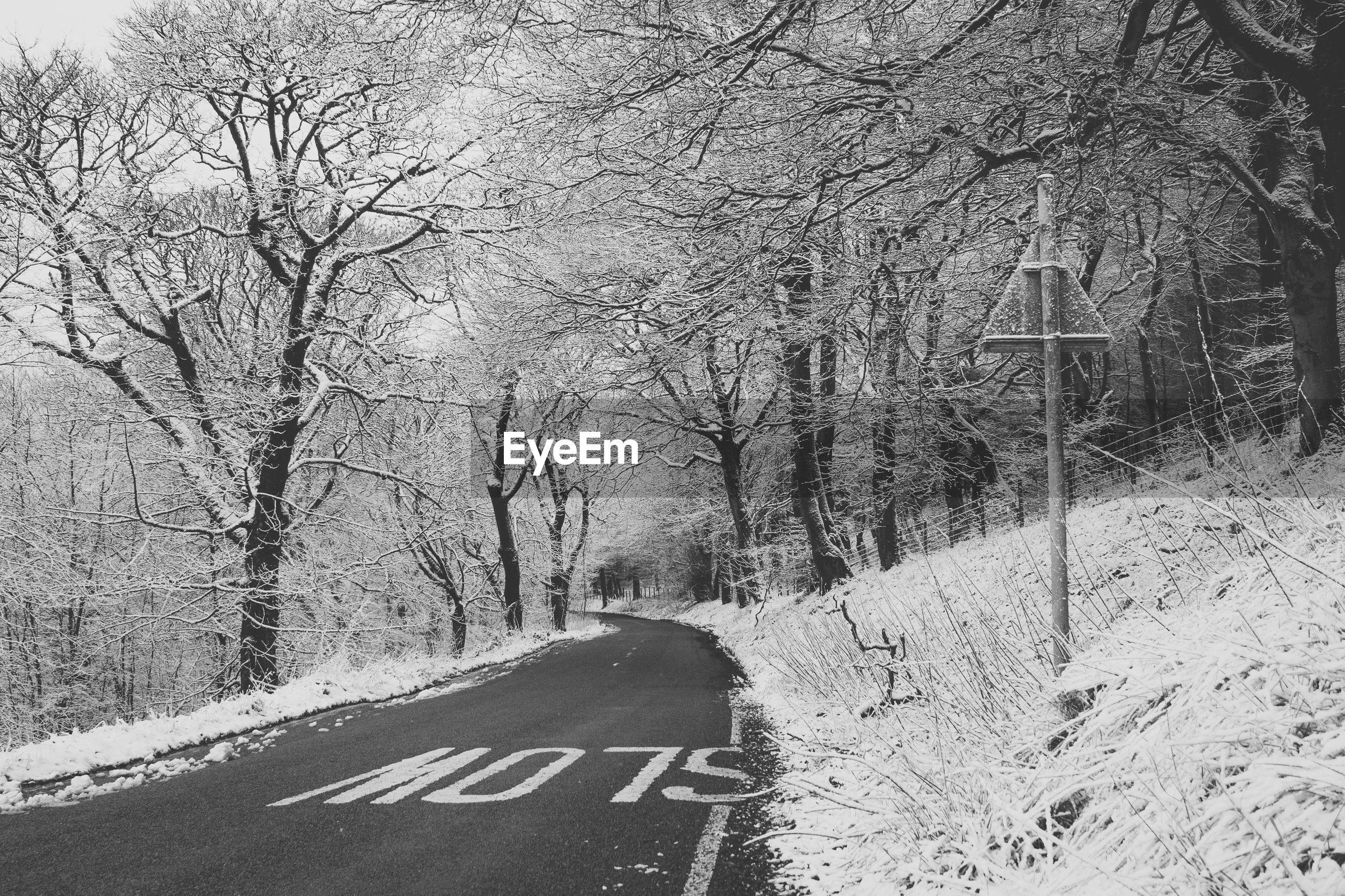 Empty road by trees during winter