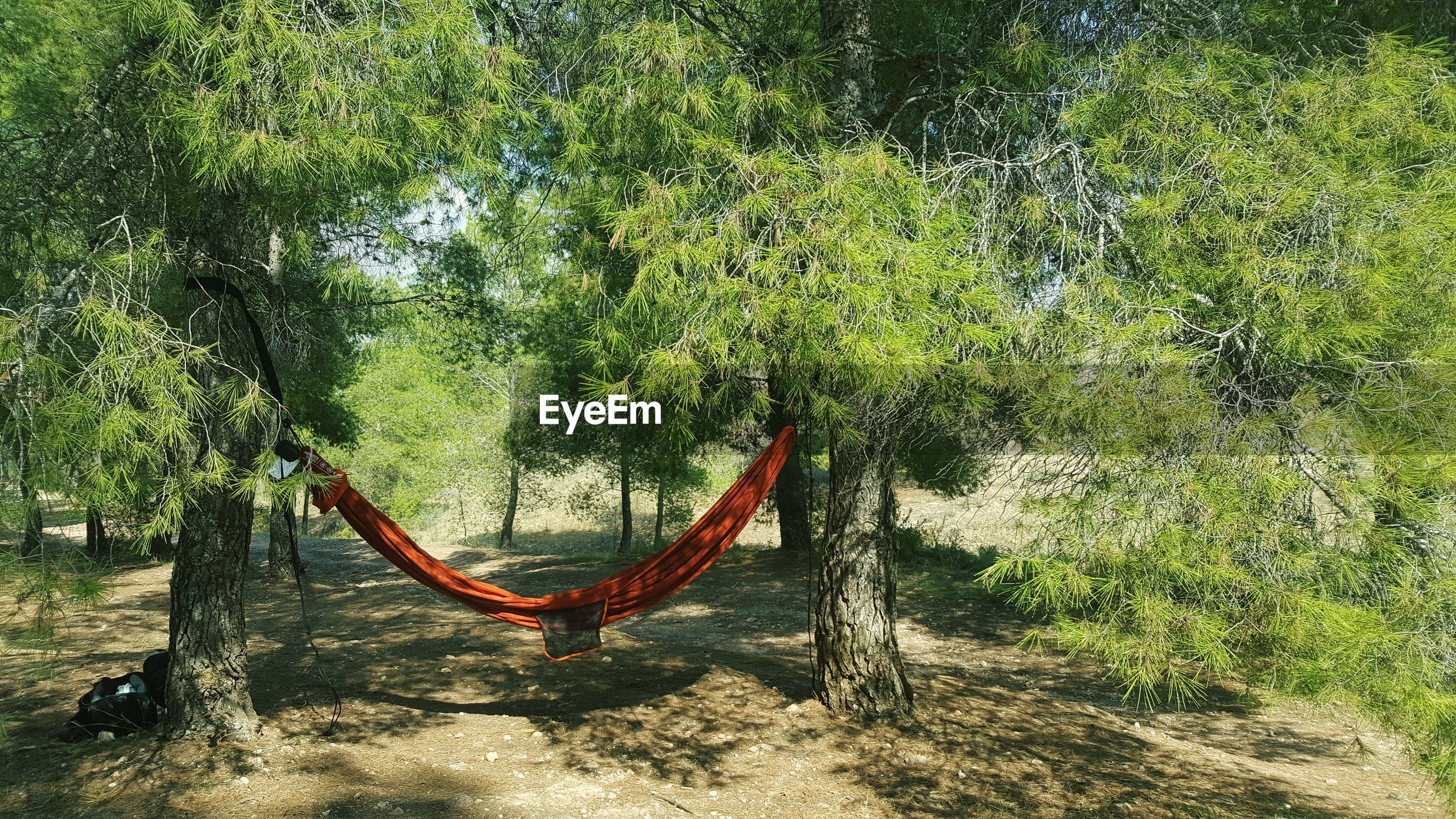 tree, hanging, sand, day, green color, growth, nature, outdoors, no people, beauty in nature