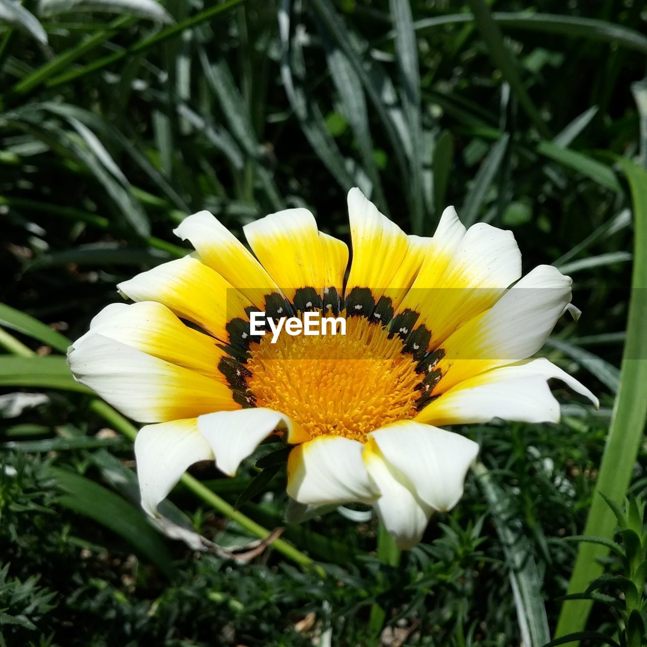 flower, yellow, petal, flower head, fragility, growth, nature, beauty in nature, freshness, day, plant, outdoors, pollen, no people, close-up, animal themes, blooming