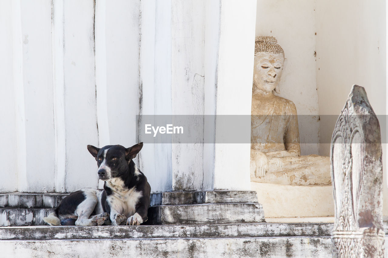 pets, domestic, mammal, domestic animals, animal themes, dog, canine, animal, one animal, vertebrate, architecture, no people, built structure, staircase, day, sitting, wall - building feature, relaxation, looking at camera, portrait