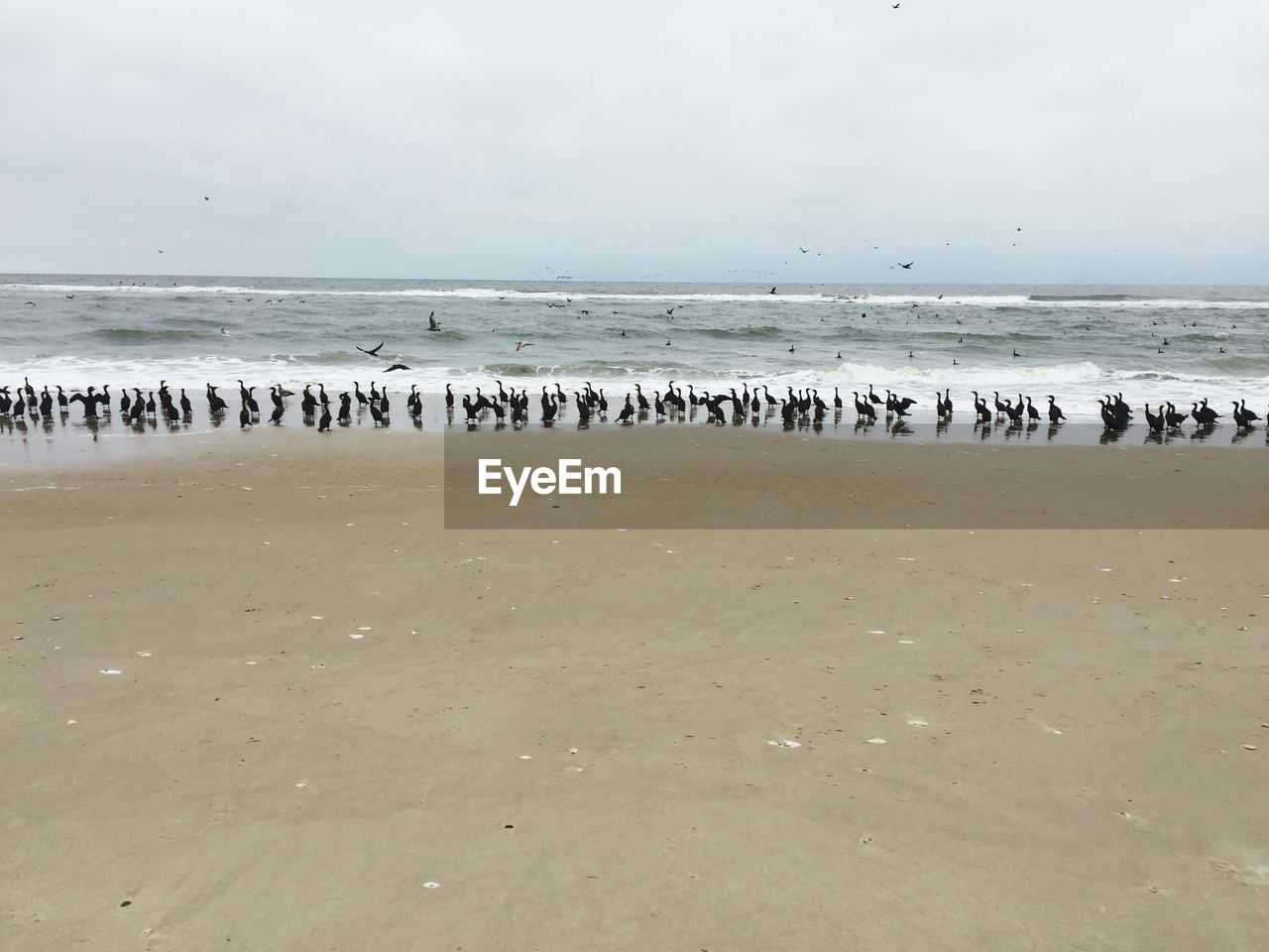large group of animals, water, bird, sea, animals in the wild, animal themes, nature, beach, flock of birds, beauty in nature, scenics, sky, tranquility, no people, horizon over water, outdoors, animal wildlife, day, flying, flamingo, swan