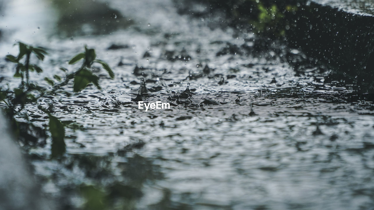 selective focus, water, nature, no people, plant, day, close-up, wet, tree, outdoors, rain, growth, textured, surface level, animal wildlife, plant part, animals in the wild, wood - material, rainy season