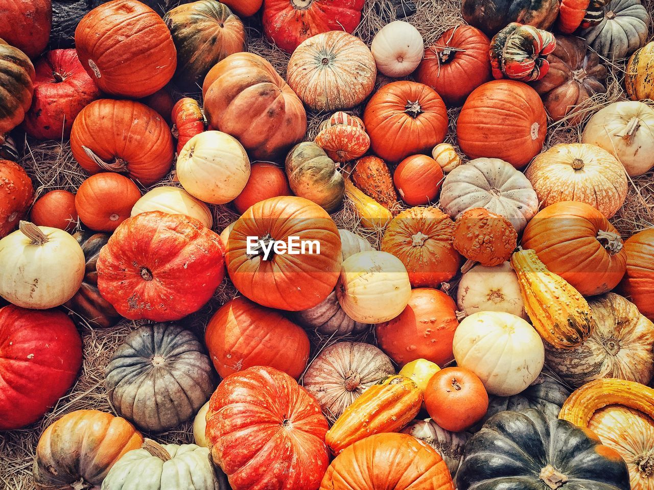 Directly above shot of pumpkins for sale