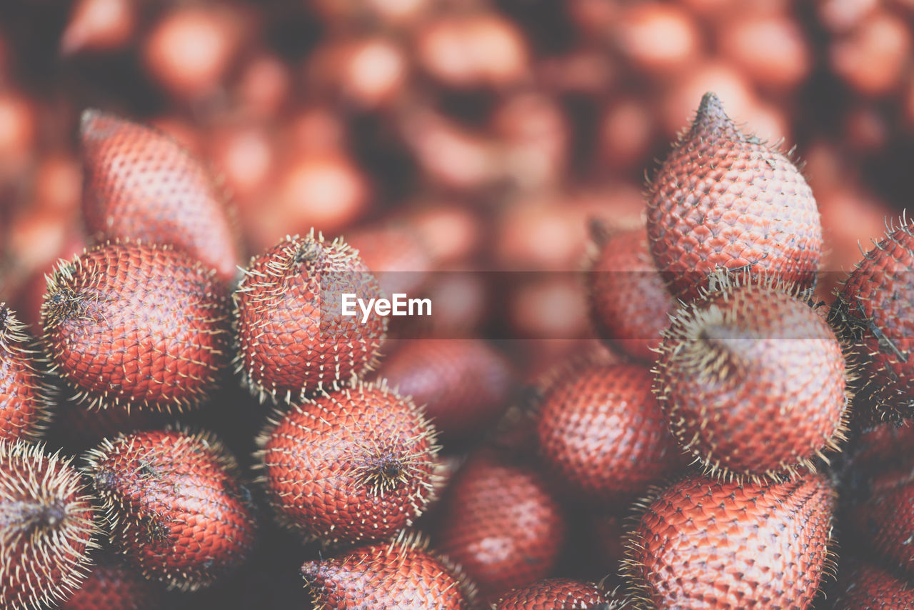 close-up, no people, food, food and drink, healthy eating, focus on foreground, freshness, fruit, wellbeing, selective focus, natural pattern, red, day, spiked, nature, pattern, full frame, outdoors, succulent plant, still life, spiky, lychee
