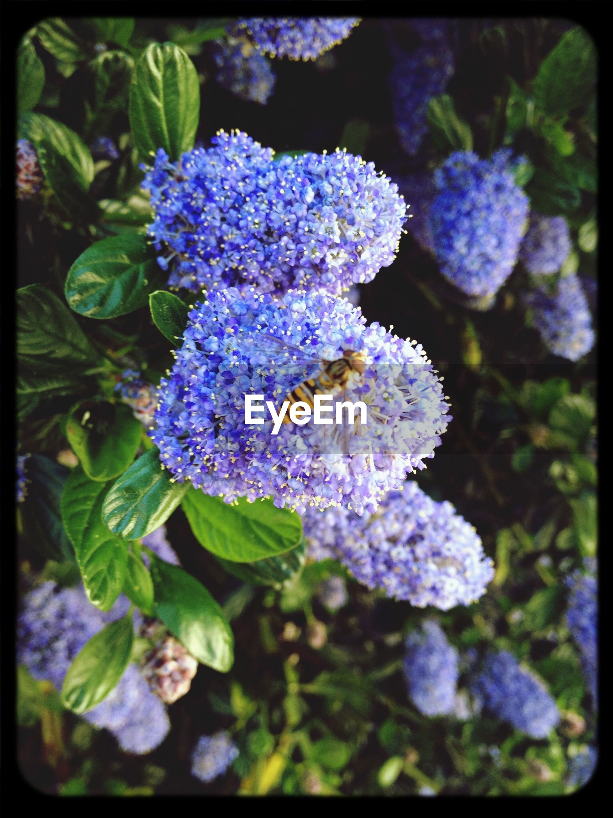 flower, transfer print, purple, freshness, fragility, growth, auto post production filter, petal, beauty in nature, flower head, close-up, plant, nature, blooming, focus on foreground, insect, high angle view, in bloom, leaf, outdoors