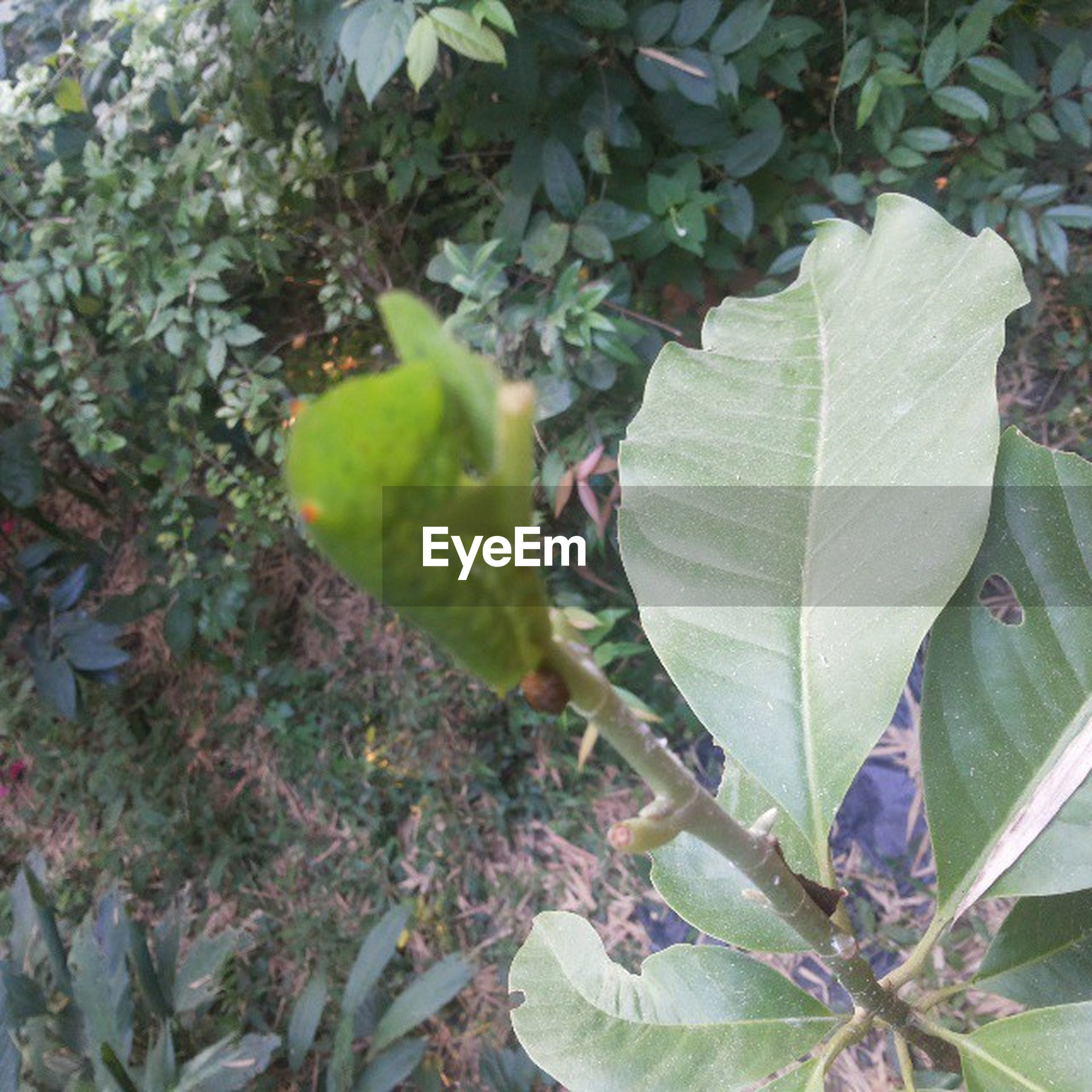 leaf, growth, green color, plant, nature, close-up, leaf vein, leaves, freshness, beauty in nature, growing, day, branch, high angle view, tranquility, outdoors, green, no people, botany, focus on foreground