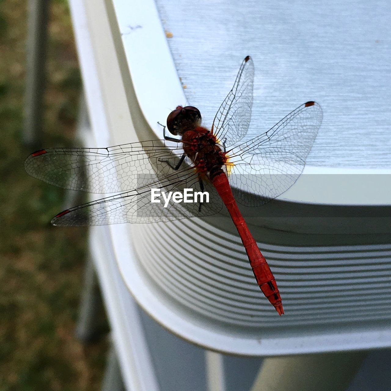 Close-Up Of Red Dragonfly On Table
