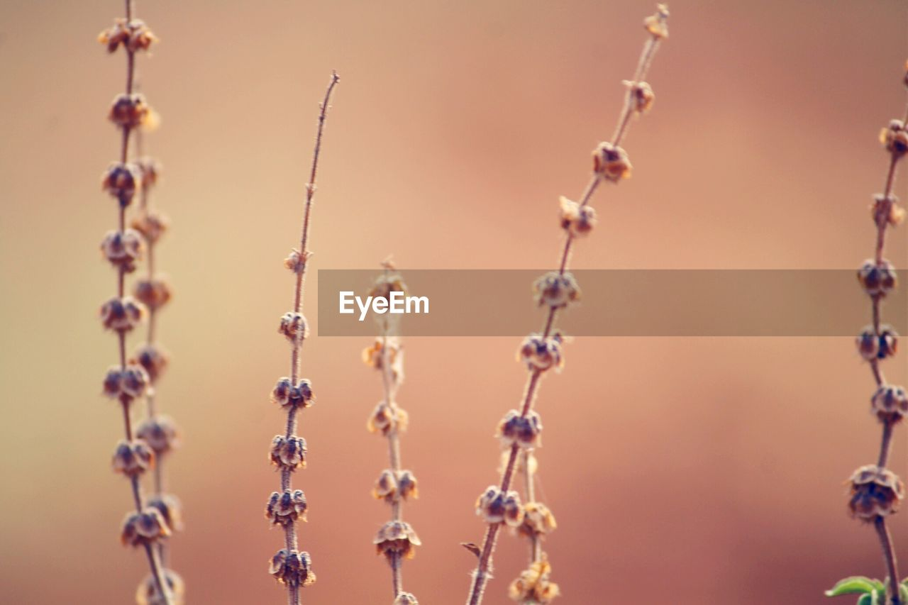 close-up, focus on foreground, no people, metal, day, outdoors, protection, nature, beauty in nature