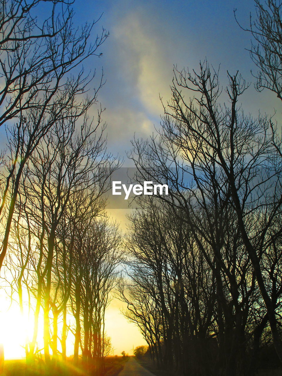 sky, tree, sunset, plant, beauty in nature, tranquility, silhouette, scenics - nature, bare tree, cloud - sky, branch, tranquil scene, no people, nature, low angle view, orange color, outdoors, non-urban scene, sunlight, growth