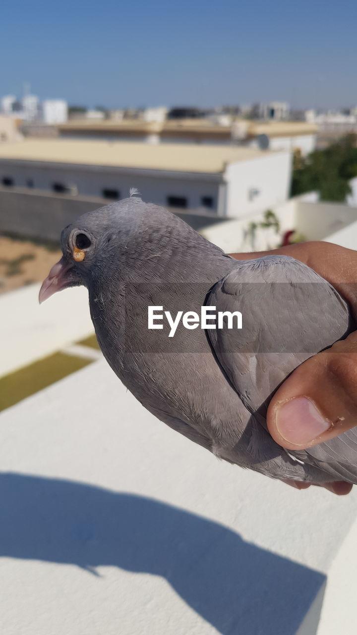 PERSON HOLDING BIRD