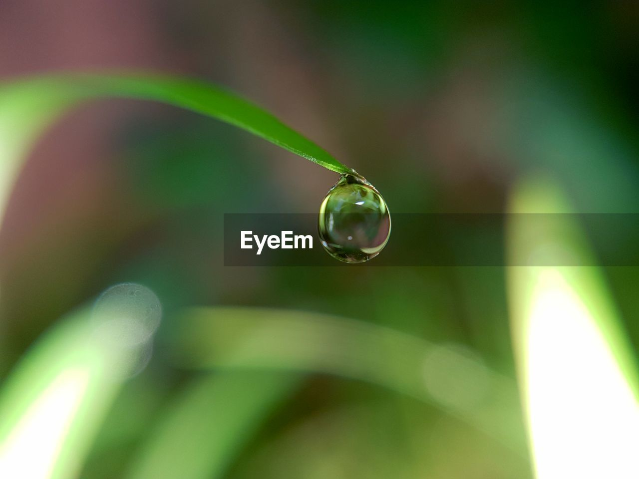 drop, close-up, water, selective focus, green color, nature, plant, focus on foreground, vulnerability, fragility, no people, wet, growth, day, beauty in nature, plant part, leaf, purity, extreme close-up, blade of grass, outdoors, dew, raindrop, rain