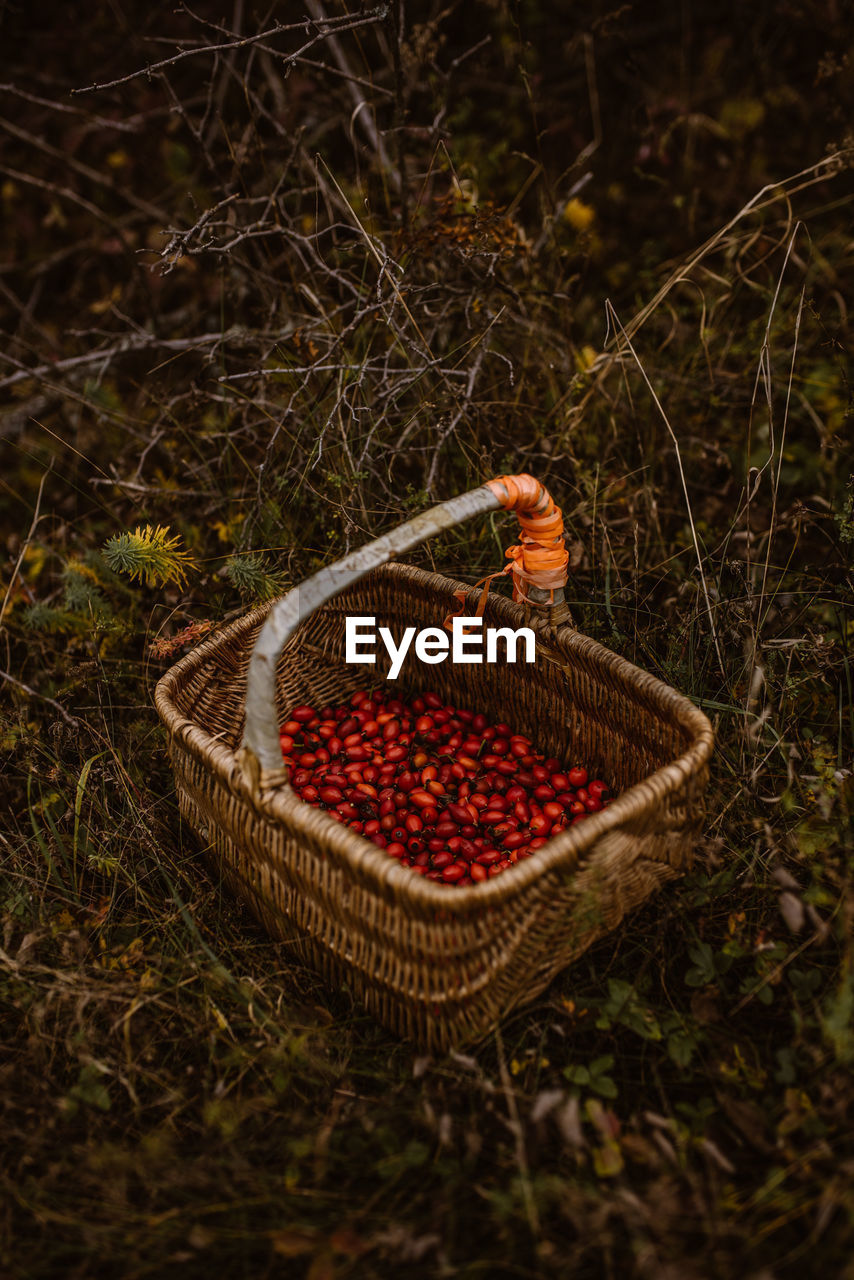 HIGH ANGLE VIEW OF FRUITS IN BASKET ON LAND