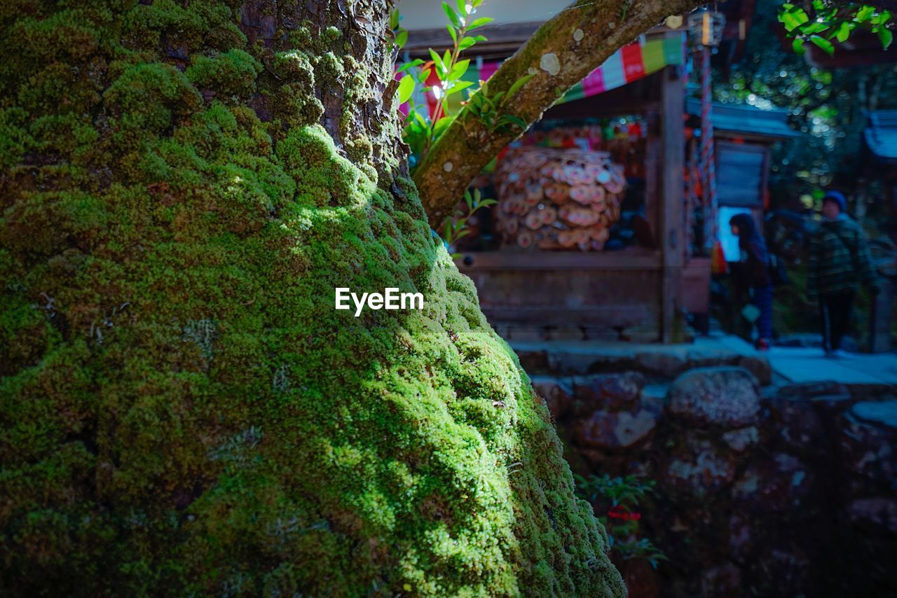 built structure, architecture, building exterior, plant, green color, nature, moss, focus on foreground, day, building, tree, growth, incidental people, rock, outdoors, solid, wall, house, rock - object, hedge