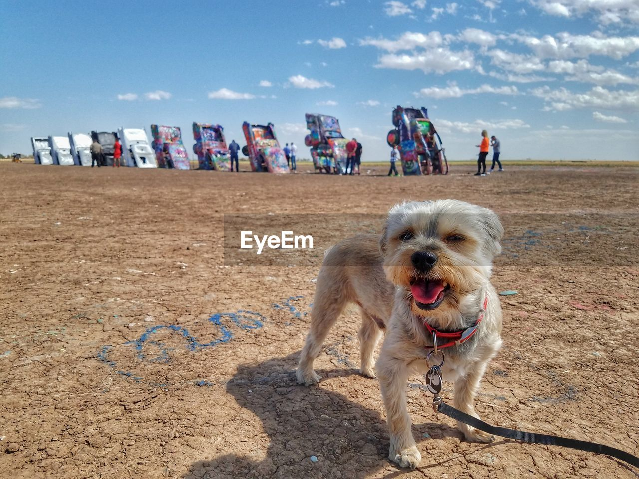 canine, dog, one animal, pets, land, mammal, domestic, domestic animals, vertebrate, nature, sky, day, people, incidental people, beach, real people, sand, cloud - sky, mouth open