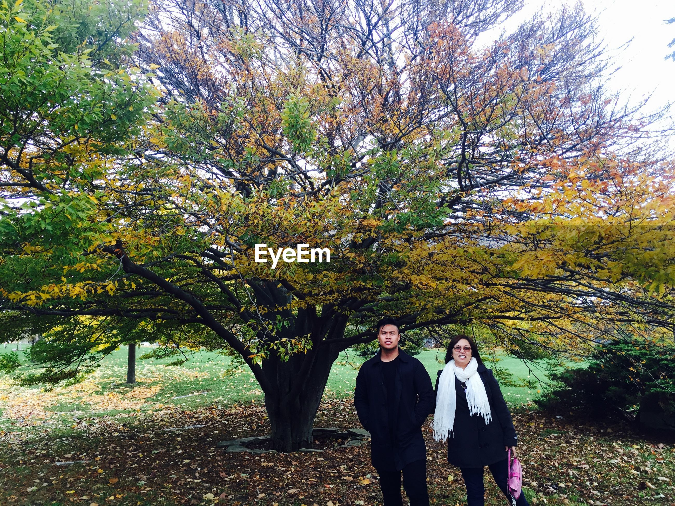 tree, lifestyles, leisure activity, rear view, casual clothing, autumn, person, standing, growth, men, togetherness, nature, walking, bonding, branch, change, park - man made space