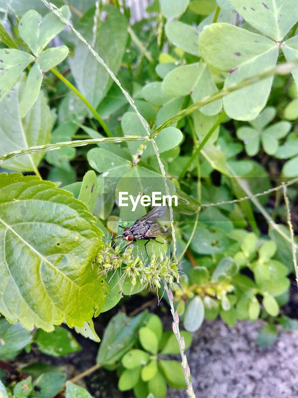 one animal, insect, leaf, animal themes, animals in the wild, green color, day, outdoors, close-up, focus on foreground, nature, plant, no people, animal wildlife, growth, full length