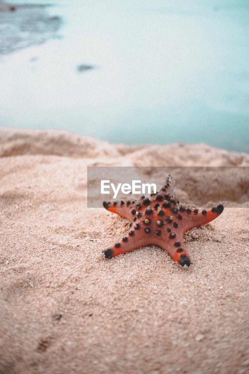 Beautiful creature of lakawoon island