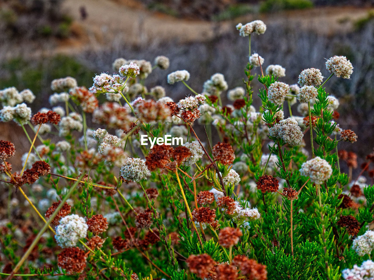 growth, flower, plant, flowering plant, beauty in nature, freshness, nature, day, vulnerability, focus on foreground, fragility, no people, close-up, selective focus, food, outdoors, tranquility, fruit, red, green color, flower head
