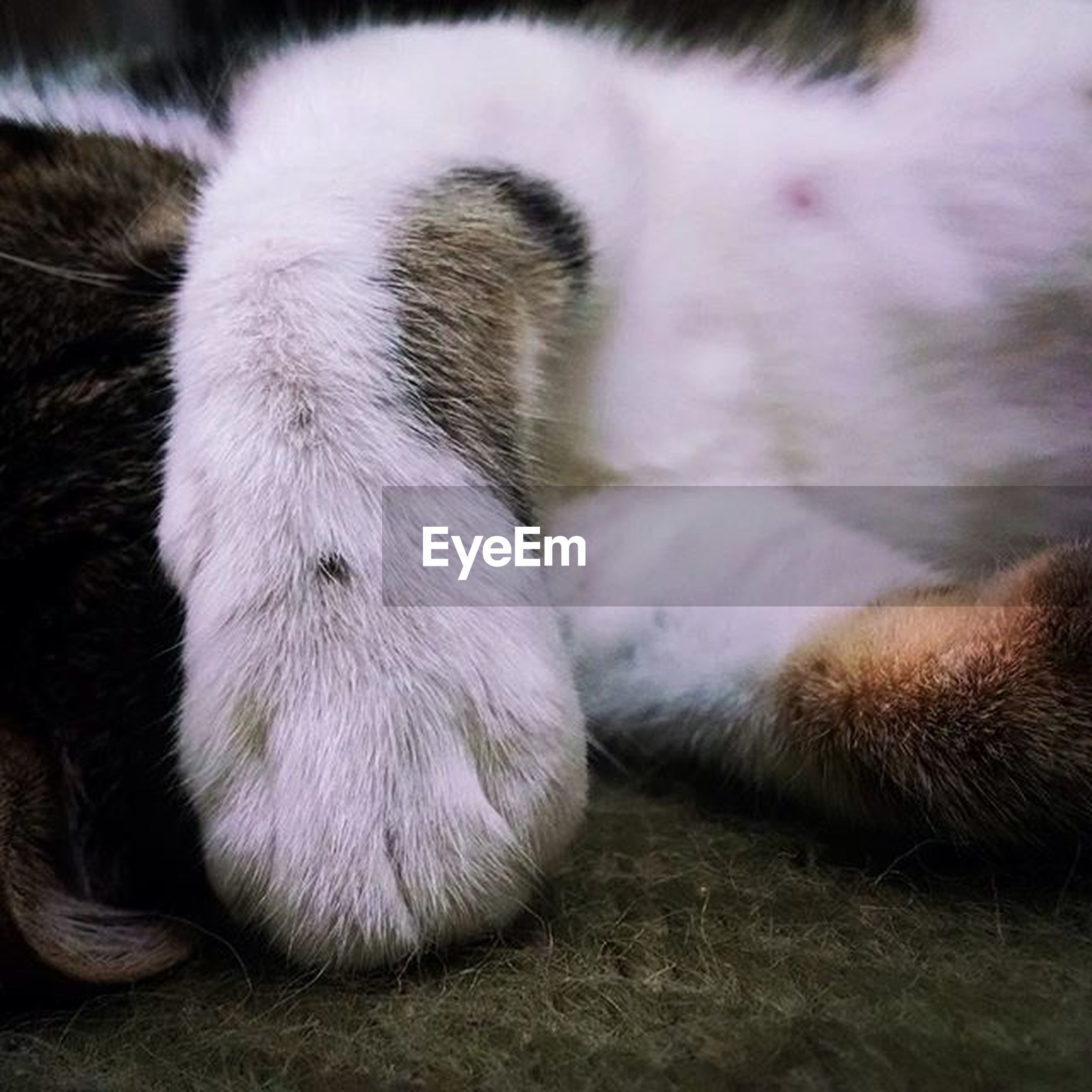 animal themes, one animal, domestic animals, pets, mammal, relaxation, sleeping, close-up, resting, dog, lying down, indoors, animal hair, animal head, white color, domestic cat, no people, animal body part, high angle view, young animal