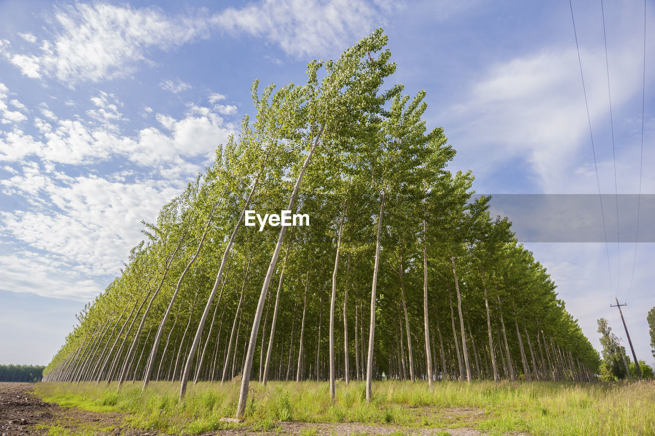Low angle view of trees growing on field against sky